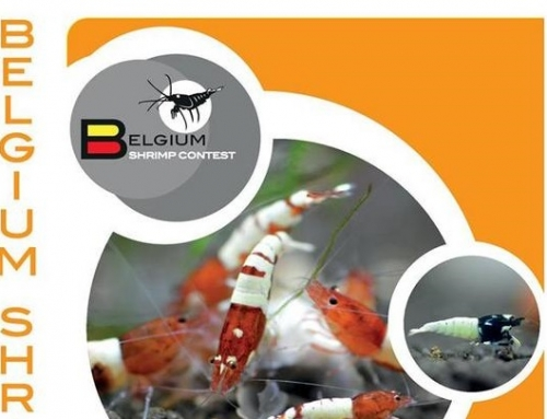 Résultats du Belgium International Shrimp Contest 2018